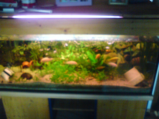 biete hier ein lieter aquarium mit unterschrank geh rt beleuchtung. Black Bedroom Furniture Sets. Home Design Ideas